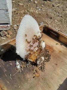 Honigwaben, Berghonig aus Griechenland