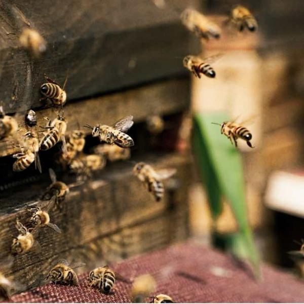 Honig aus Orangenblüten, Gourmethonig